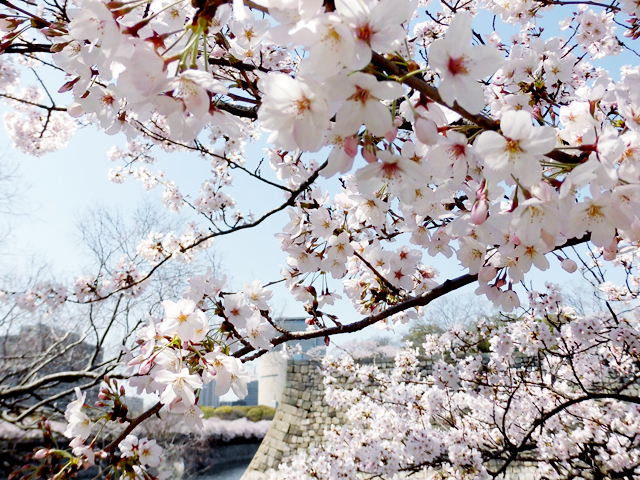 The Earliest Cherry Blossom Viewing In Japan All You Need