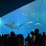 Churaumi Aquarium Access (Rental car or bus)