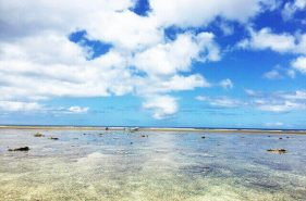 Perfect guide for Yaeyama Islands and Must-See Spots!
