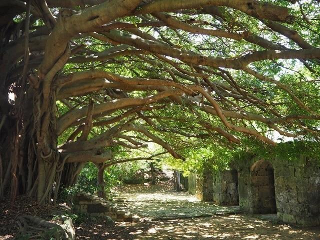 OkinawaTerrorStoryTour!SpookyOkinawastories,folkloreandmythicalspots!