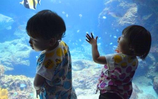 【子連れで行ってきました♪】沖縄美ら海水族館はこう楽しむ!