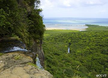 西表島 大迫力の自然に驚き