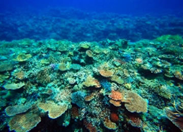 西表島 陸の孤島船浮のテーブル珊瑚