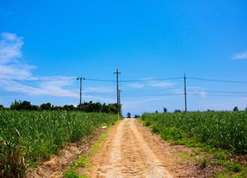 小浜島 ウージの中の一本道