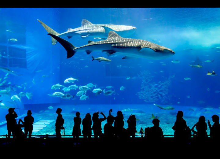 美ら海水族館と伊江島のタッチュー