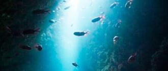 透明度抜群の海、その奥へ
