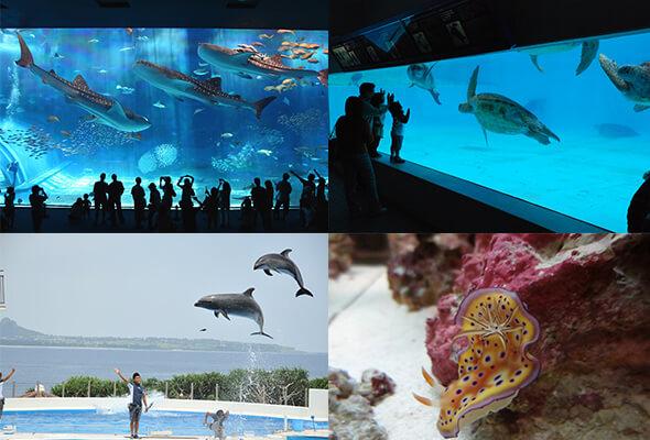 美ら海水族館イメージ