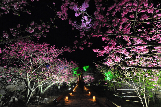 沖縄の夜桜