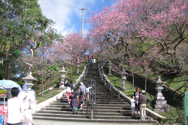 沖縄の桜咲く石段