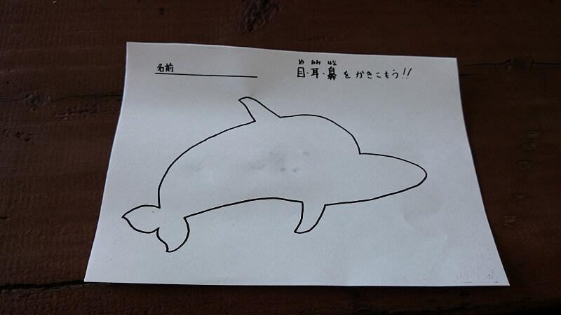 イルカの目耳鼻