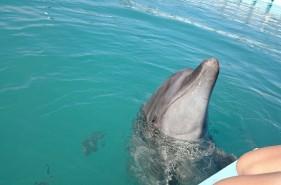 沖縄でイルカと触れあい体験!水に濡れずにイルカと遊ぼう