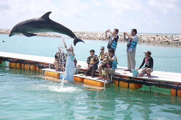ishigaki-spot-dorfinshow