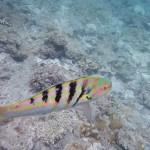 私流、阿嘉島の過ごし方【国立公園に指定された美しい海】