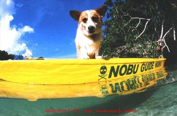 nobu-guide-works