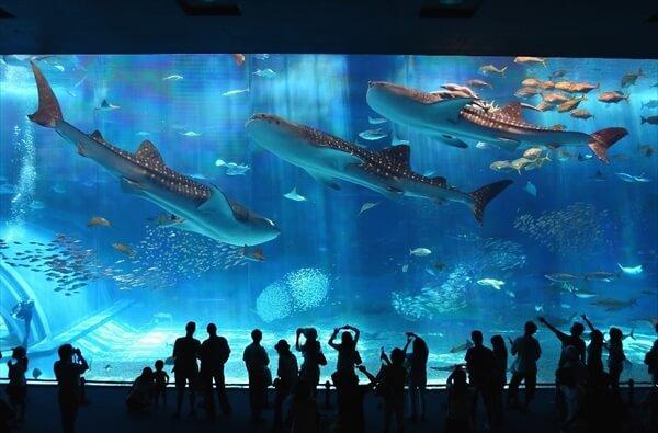 okinawa-churaumi-aquarium-image-a