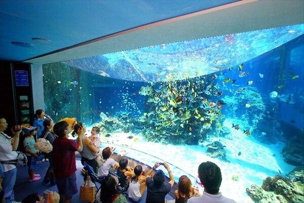 okinawa-churaumi-aquarium-image-b