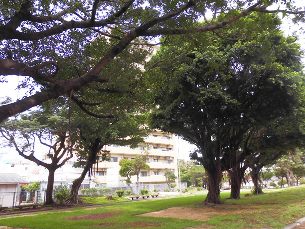 那覇・緑ヶ丘公園の景色