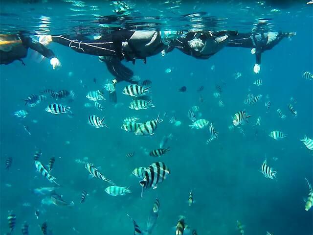 青の洞窟付近の魚