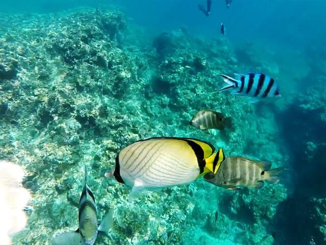 青の洞窟周辺の熱帯魚