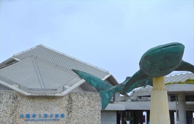churaumi aquarium imagephoto