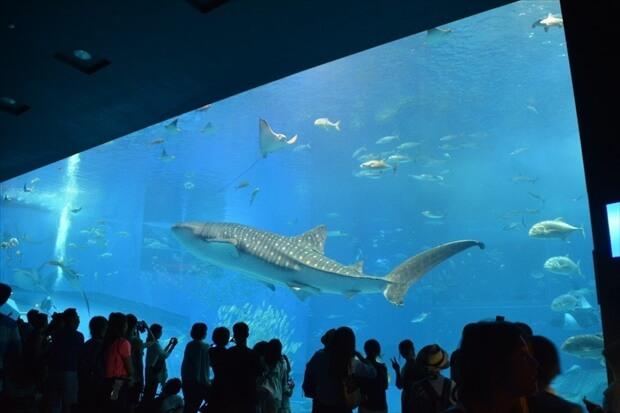 沖縄美ら海水族館イメージ