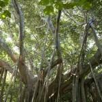 沖縄の聖なる力に触れる旅。沖縄本島のパワースポット7選!