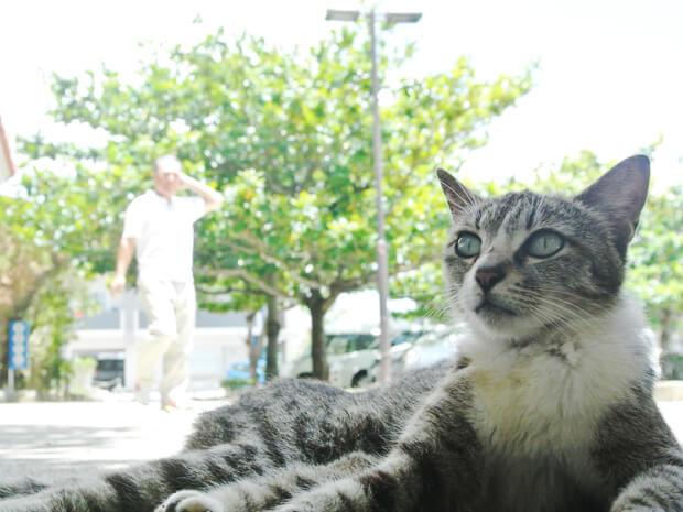 識名園の門前にいる猫