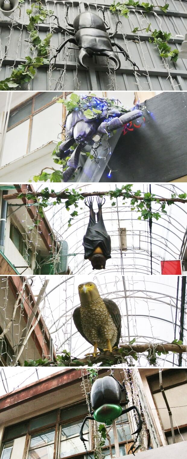 むつみ橋通りの鳥・昆虫