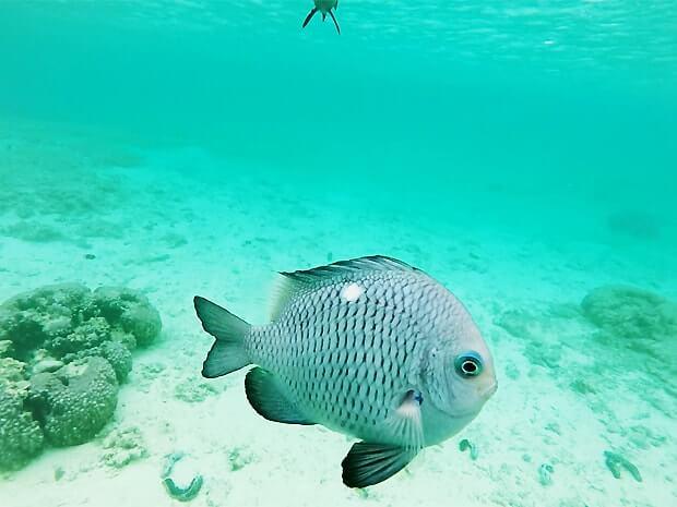 ナガンヌ島の海の熱帯魚
