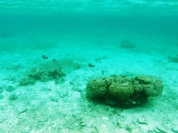 ナガンヌ島の海の中