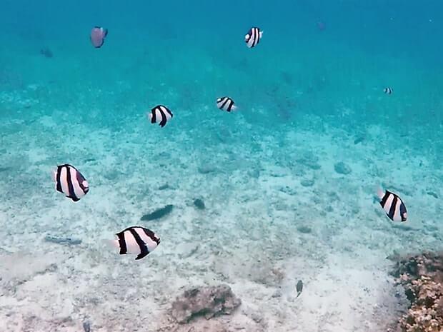 ナガンヌ島の熱帯魚たち
