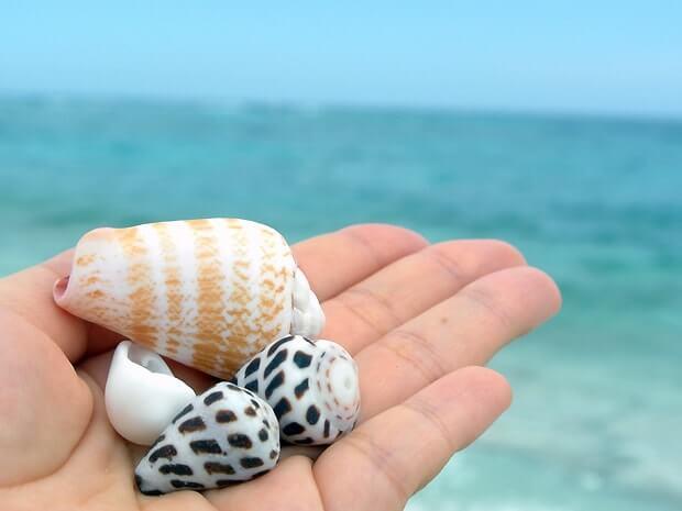ナガンヌ島で貝殻