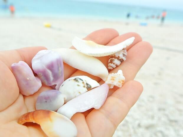 ナガンヌ島貝殻集め