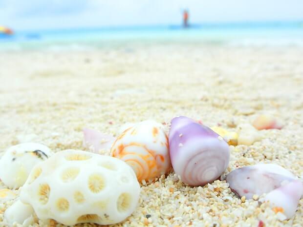 ナガンヌ島の浜辺の貝殻