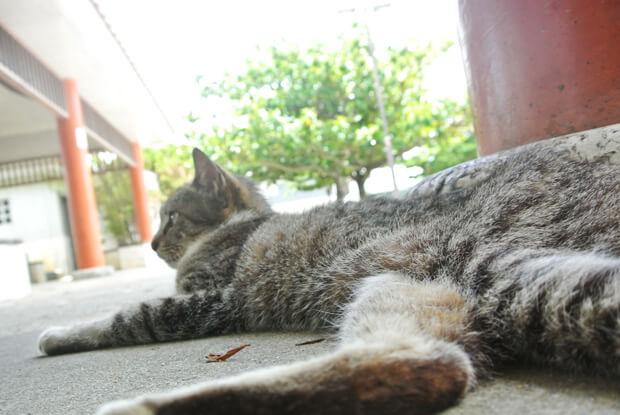 識名園の門番猫