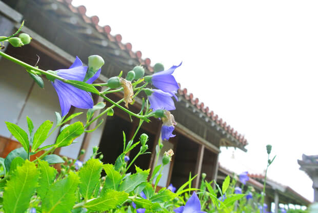 御殿近くの花
