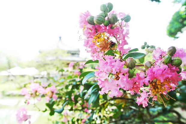 心字池のほとりの花