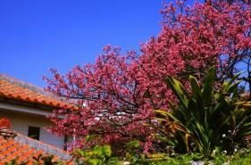 冬だからこそ行きたい!沖縄の2月見どころまとめ