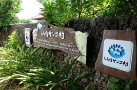 「しらほサンゴ村」と白保(しらほ)のサンゴ礁を楽しめるスポットを紹介します!