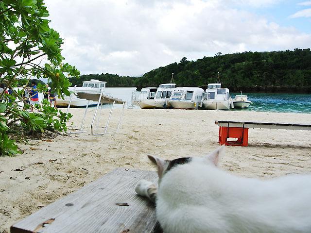 川平湾と猫