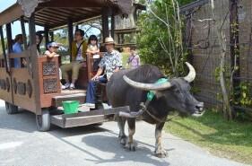 ゴールデンウィークの沖縄旅行♪見どころ&注意したいこと!