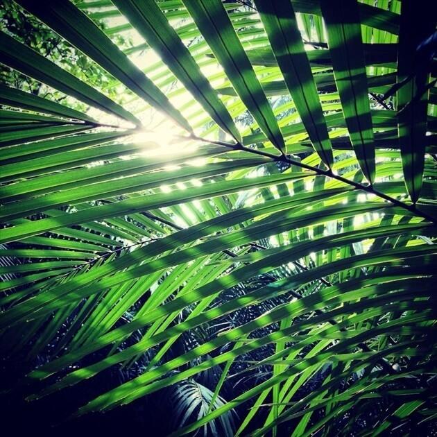 石垣島をひとり旅