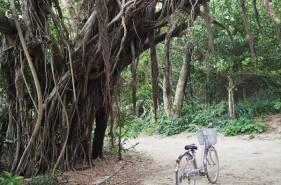 レンタサイクルで行く!神の島「久高島」旅のすすめ
