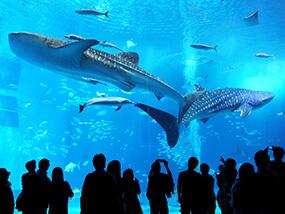 旅の提案3 美ら海水族館