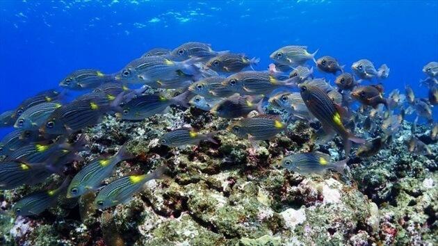diving at Ishigagki island