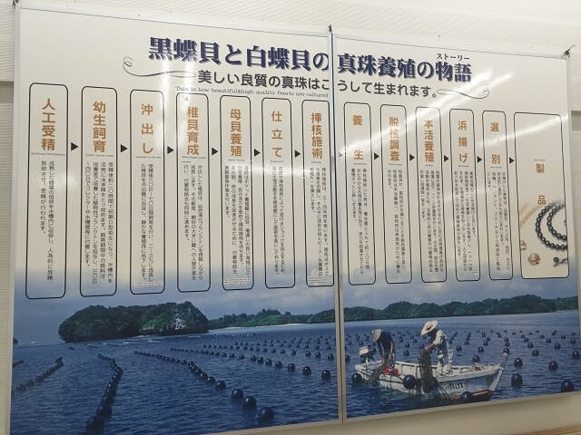 石垣島 真珠 成功までの道のり