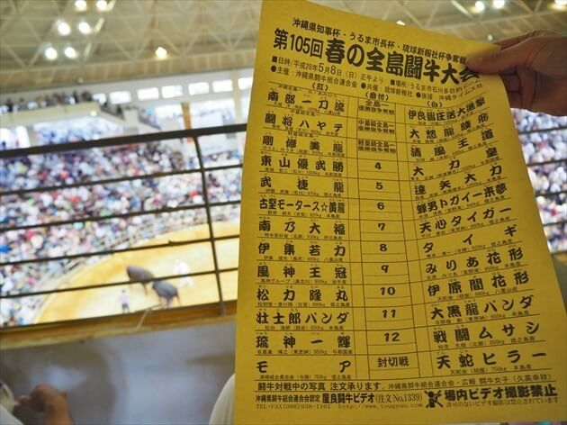 okinawa-fighting-bull-07_R