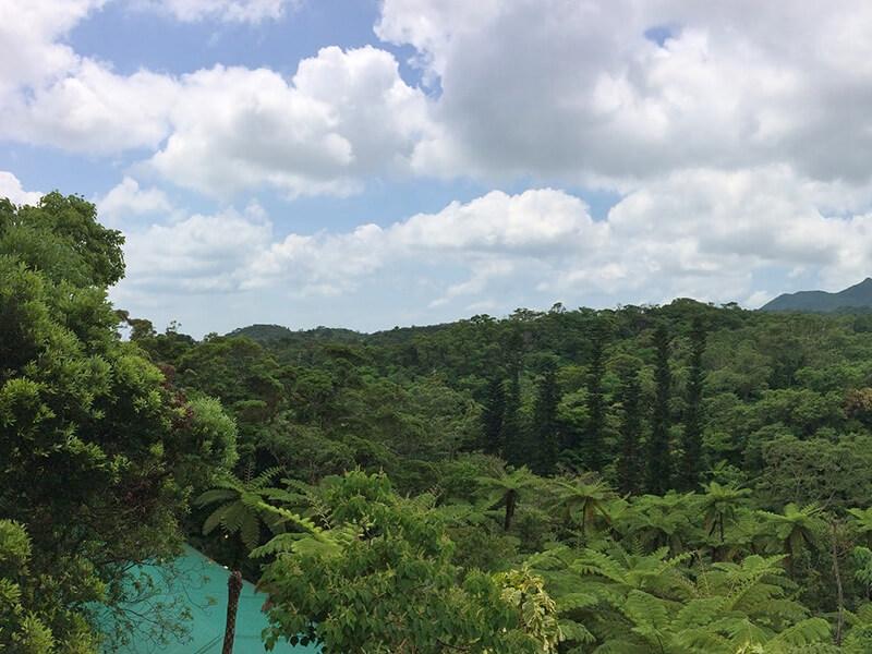 やんばる亜熱帯の森 風景