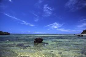 """森も海も大自然!""""西表島でダイビング""""のココが魅力です!"""