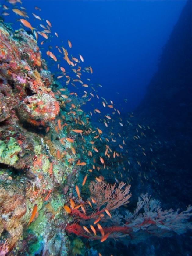 久米島ダイビング